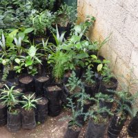 Forestry Nurseries Assessment - February 22, 2016